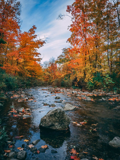 View of autumnal trees by stream