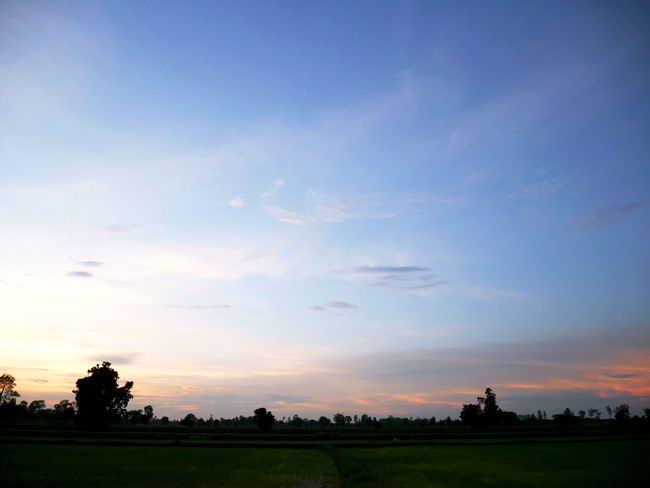 Beautiful tree and field landscape in Thailand. Beauty In Nature Cloud - Sky Environment Field Idyllic Land Landscape Nature No People Non-urban Scene Orange Color Outdoors Plant Scenics - Nature Silhouette Sky Sunset Tranquil Scene Tranquility Tree