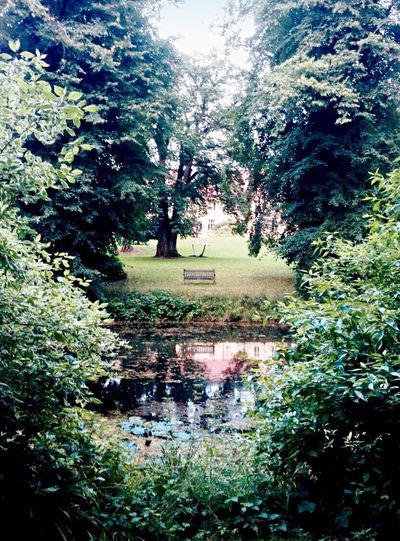 Bank_am_See. Nature Tree Green Green Color Grass Outdoors Beauty In Nature Bank On The Lake Lake Reflection Water Quiet Moments Quiet Places Fairytale  Scenics No People Architecture_collection Mirror Alone Time Park Oberhof Baltic Sea The Secret Spaces Landscape Tranquility