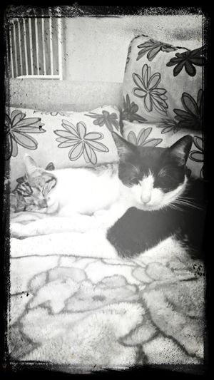 Miezekatze Cat Lovers Cat♡ Katzen