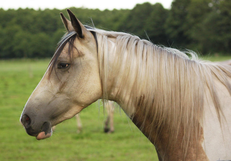Close-up of horse in farm