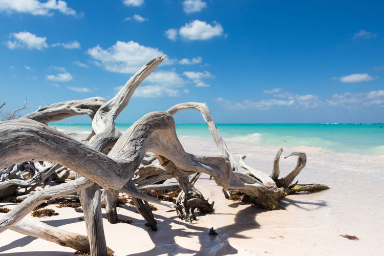 Dead tree on beach against sky