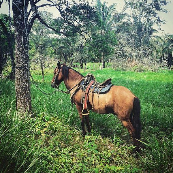 Mi caballo y yo sabemos de cruzar un río crecido en los tiempos inverneros, de mañosera y aparte en los trabajos mayeros y de enamora' una hembra bajo la luz de un lucero👣🎶 Arpa Llano