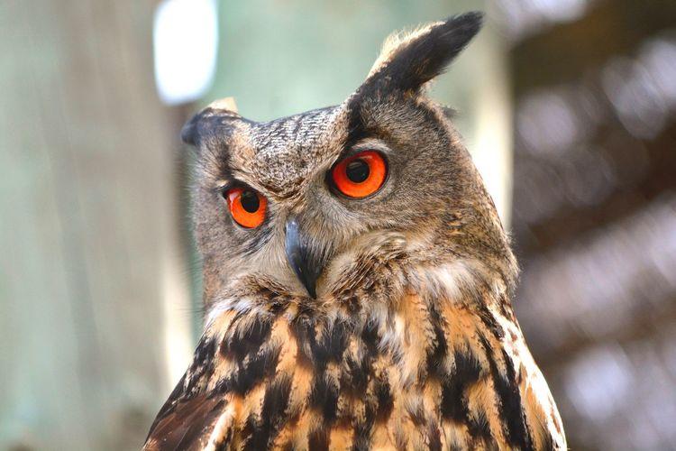 Close-up of an owl looking away