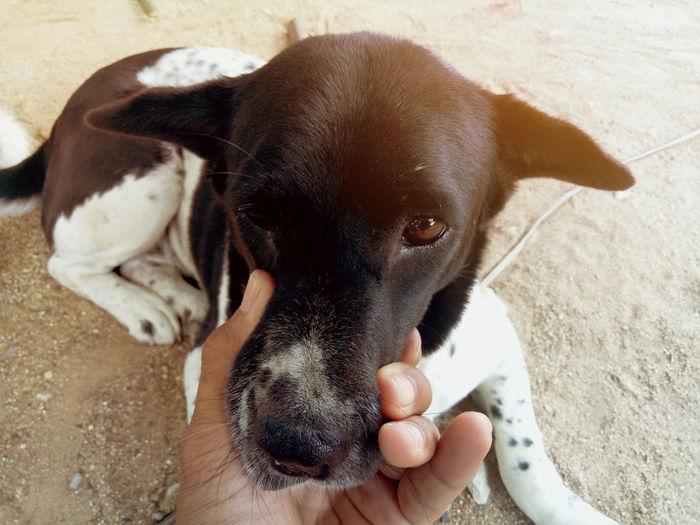 High angle view of dog on hand