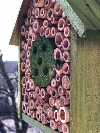 Wildbiene wach Frühlingsgefühle Frühlingserwachen Frühling Insektenhaus Bienenhotel Wildbienen Wildbiene Day No People Outdoors Close-up Green Color Wood - Material Pattern Freshness Architecture Building Exterior Nature