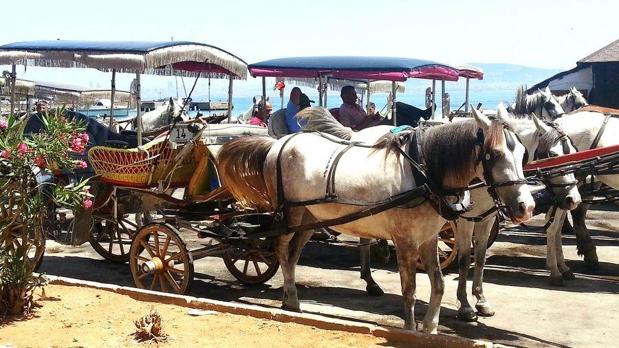Photography Travel Photography Horses Faytonturu Burgazada EyeEm Animal Lover