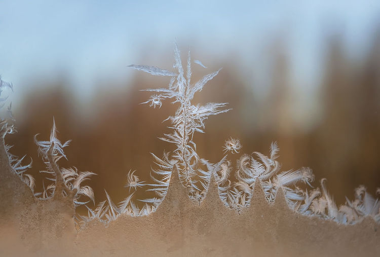 Close-up of snowflakes on ice