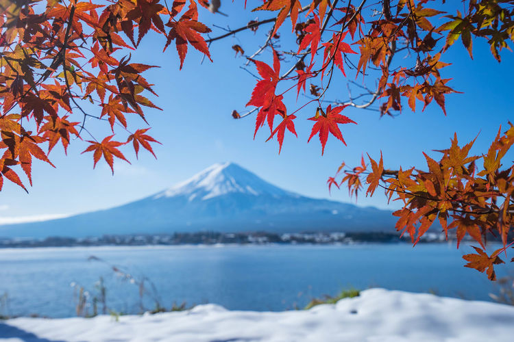 Autumn Tree By Mountain Against Sky