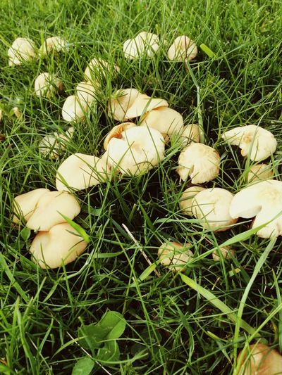 Not mushroom here! Field Mushroom Mushrooms Grass Nature Spring Summer