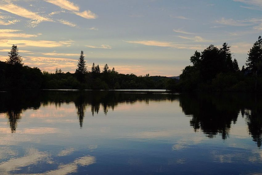 Sony Camera Sony A7 Tree Water Sunset Lake Reflection Silhouette Gold Sky Reflection Lake Calm Tranquil Scene Tranquility