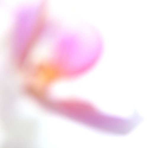 Out Of Focus IPSFlowers