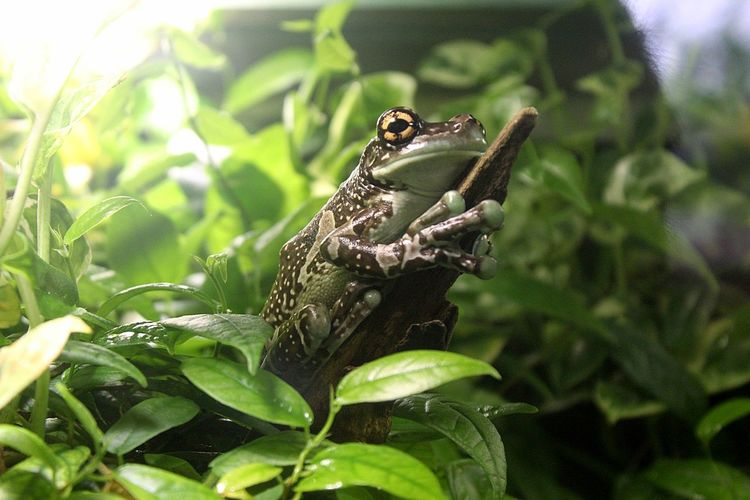 D_Eye Photography Canon EOS 1855mm Lyon France Picoftheday Instapic Instagood Nature Leaf Frog Wildlife Little Animal Amphibian Tropical Grass Rainforest Garden Wild Biology Color Environment Animal Themes EyeEmNewHere