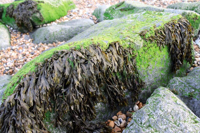 Seaweed shore