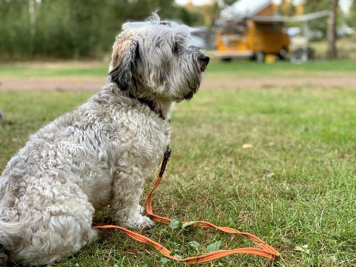 Dog sitting on grass in field