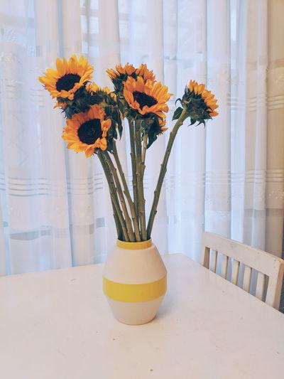 Sunflowers vase on white table