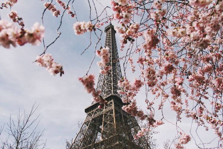 Paris in the spring Eiffel Tower France France Photos France🇫🇷 Paris Paris ❤ Paris, France  Blooming Flowers No People Outdoors Pink Color Pink Flower Sky Spring Spring Flowers Springtime First Eyeem Photo
