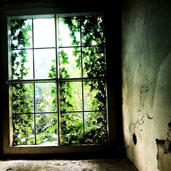 Window Window Glass - Material Day Transparent No People Indoors  Architecture Plant Nature Damaged Pattern Green Color Abandoned Window Frame Glass House