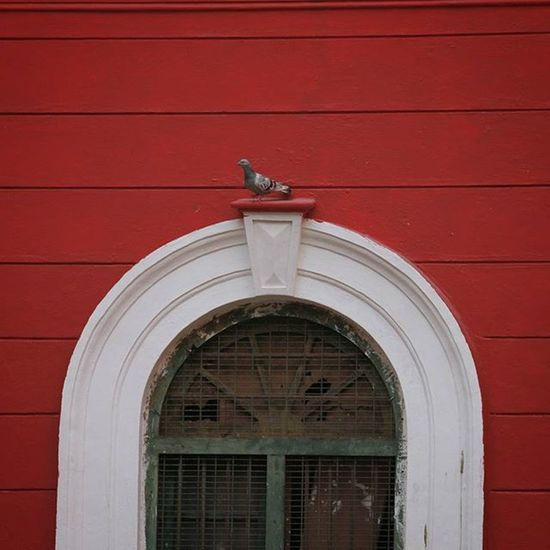 Parking Canon Canon_photos Red Lines Bird Old Door Colours Moments Bangalore Explore Exploreindia ExploreEverything Exploremore Minimalism Learnminimalism Igers Photooftheday