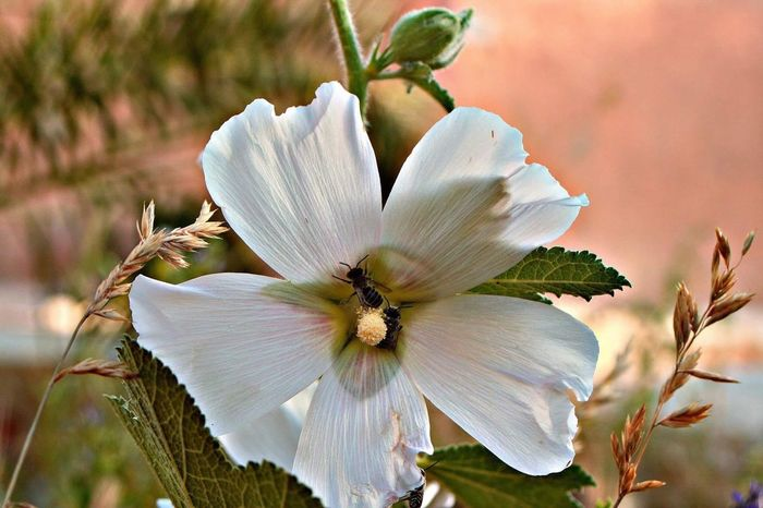 وردة المحبة Flower