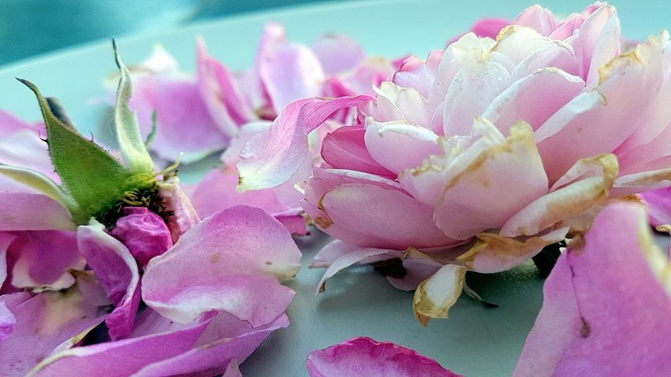 Faded Roses Decorated On A Plate Flower Petal Flower Head Fragility No People Nature Beauty In Nature Close-up Freshness Pink Color Day Outdoors Pastel Colored Garden Photografie Outdoors Photograpghy
