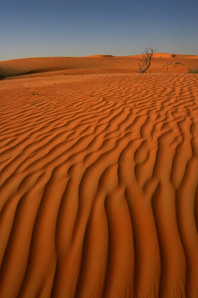 Texture and pattern of sand dune in desert Dubai Desert Dubai Holiday Life Textures And Surfaces Travelling Wildlife & Nature Wind Power Winter Al Maha Resort Day Desert Beauty Desert Landscape Landscape No People Rough Rough Texture Sand Sand Dune Sandstone Sandy Scenery Texture Wild Wind
