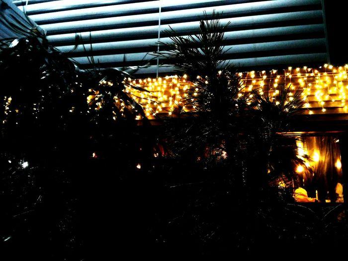 Illuminated Indoors  Christmas Lights No People Christmas Decoration Christmas Tree Christmas Greenhouse Christmas Ornament Хорошийдень Adults Only красивая жизниннаяцитата любимоефото красивыйвид ... Beautiful Woman Only Women Storm Cloud Cloud - Sky люблюфотографировать First Eyeem Photo