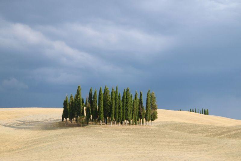 Palm trees on sand dune at beach against sky