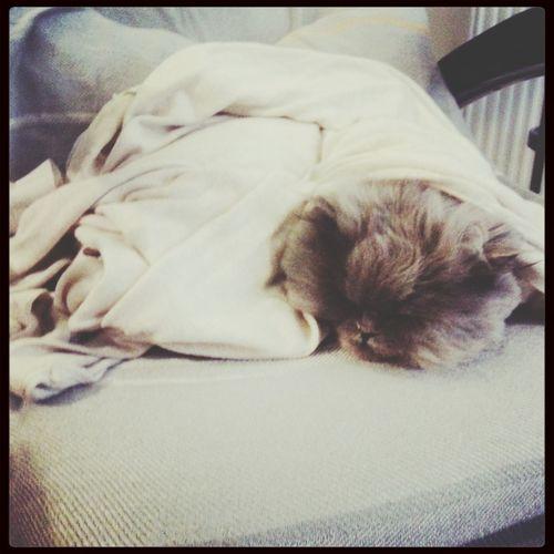 My name s luna Cat Animals Animal Love Cat♡