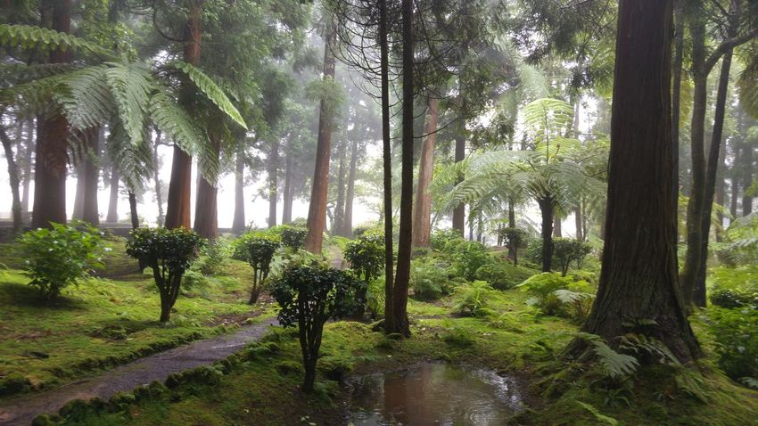 Sao Jorge Island Garden Raining Day Green Relaxing Silence Of Nature Azores Islands Sete Fontes Water Reflections