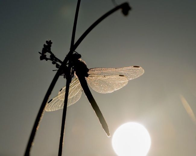 Insect Animal Themes Animals In The Wild One Animal Close-up Animal Wildlife Focus On Foreground Outdoors No People Damselfly Day Nature Perching Nature Dragonfly Insects  Close Up Macro Photography Macro Nature Macro Macro_collection Closeup Dragonfly💛 Beauty In Nature Macro Beauty