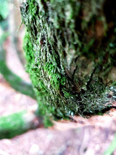 Tree Close-up Grass Plant Caterpillar Growing Spider Web Dandelion Lichen Arthropod