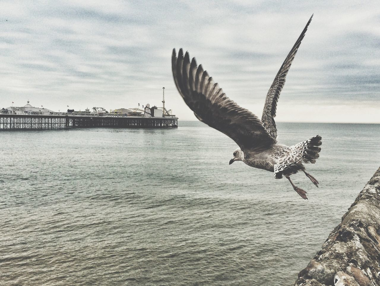 Animal Themes, Animals In The Wild, Bird, Brighton, Day