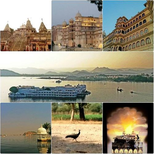 Temples, Palaces , Lakes  and a view to die for! Udaipur Cityoflakes Rajasthan Peacock Citypalace Lakepalace Fatehsagar