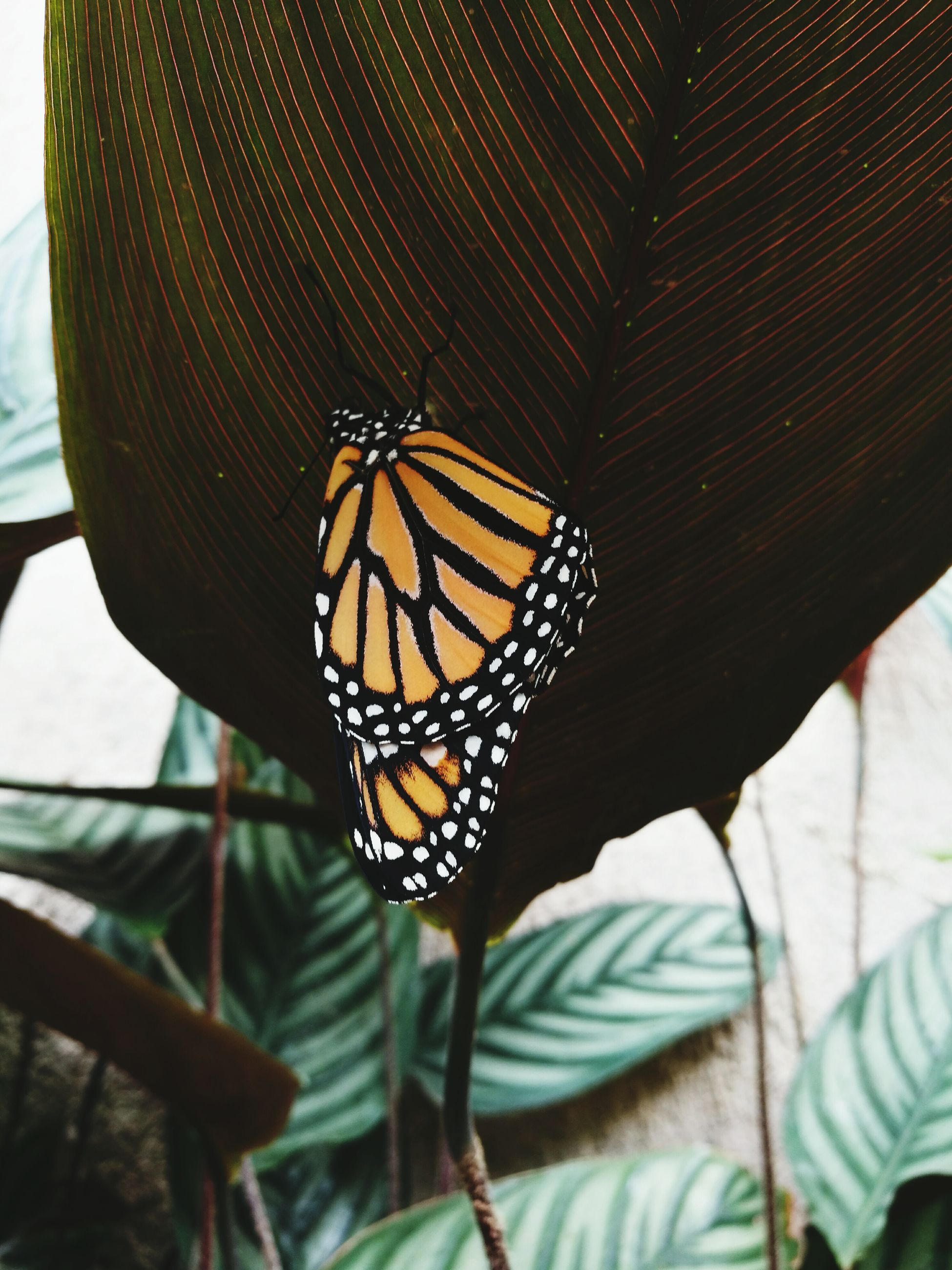 one animal, insect, close-up, animal themes, butterfly, focus on foreground, beauty, green, no people, beauty in nature