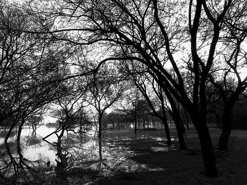 Thol Ahmedabad Thol Gujarat Instagram_ahmedabad Blackandwhite Abstract Landscape Beautifuldestinations Canonsx50 Canon_photos Lake Nature Indiaclicks Distantplaces