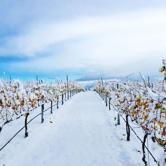IPSSquare Snow ❄ Winecountry Temecula California