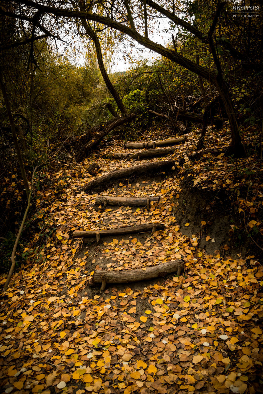 tree, plant, autumn, nature, leaf, forest, plant part, no people, land, tranquility, staircase, day, beauty in nature, absence, tranquil scene, steps and staircases, outdoors, the way forward, footpath, architecture, change