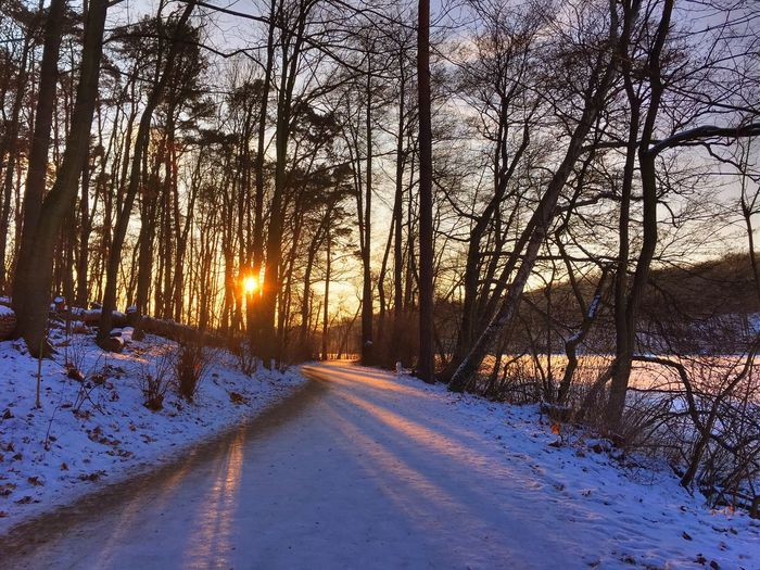 forest track near a frozen lake in the winter Bare Tree Branch Cold Cold Days Cold Temperature Cold Winter ❄⛄ Dirt Road Forest Forest Track Outdoors Snow Snow ❄ Sun Sundown Sunset Sunshine Tree Tree Trunk Walk Walking Around Winter Winter Wintertime Wood Wood Land