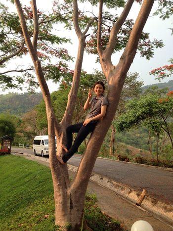 Tree Climbing Happy Moment