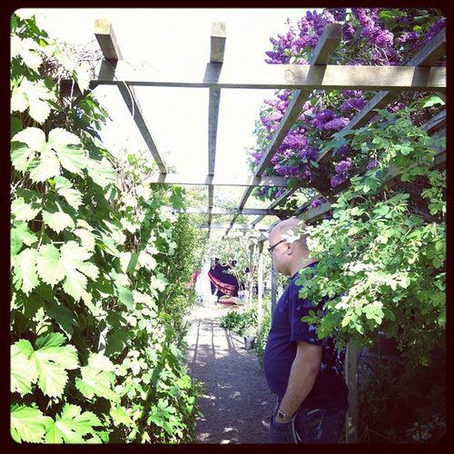 Angelislands Gardens