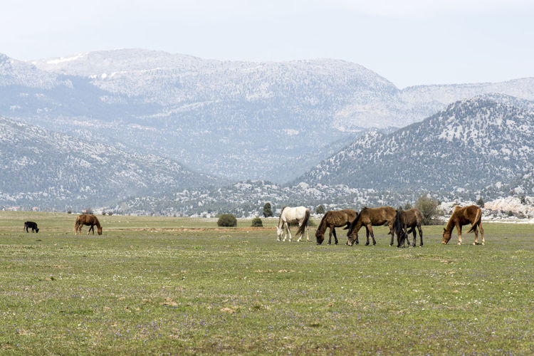 Horse Grazing On Field Against Mountains