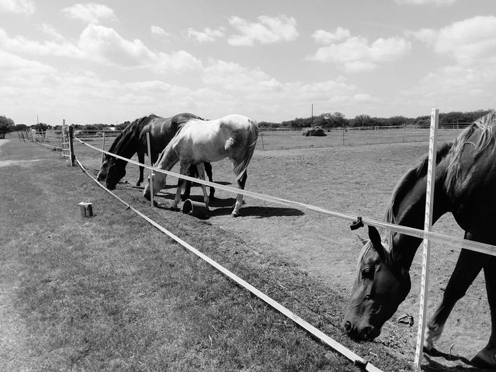 EyeEm Selects Horse Paddock Outdoors Field Nature No People Day Grazing Animal Themes Domestic Animals Livestock Animal Agriculture Mammal One Animal Brown Rural Scene Sky Oil Pump First Eyeem Photo EyeEmNewHere.