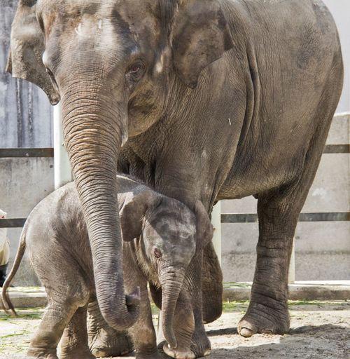 Baby elephant from last year!! Baby Elephant Cute Animals
