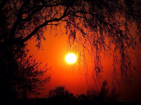 Sunset Skyporn EyeEm Nature Lover Tree