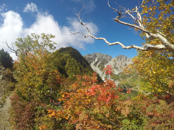 The Japanese Alps in Autumn Autumn Beauty In Nature Branch Cloud - Sky Day Growth Japan Japanese Alps Kami Low Angle View Mountain Mountains Naga Nature Nature Nature_collection No People Outdoors Scenics Sky Tree Tree 上高地 山 日本 First Eyeem Photo