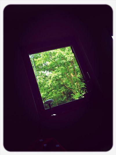 Guten Morgen Wald
