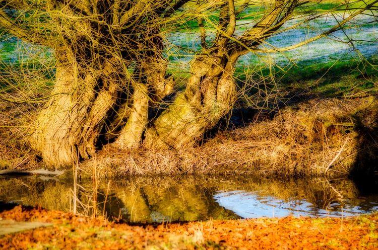 Flusslandschaft GERMANY🇩🇪DEUTSCHERLAND@ Nature No People Outdoors