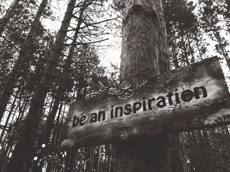 Electric Forest Inspirations Inspirational Tree Tree Trunk Nature Forest