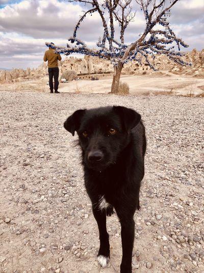 Dog standing on land